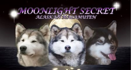 Moonlight Secret